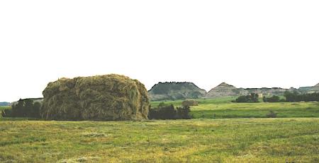 12 ton loose haystack IMG_1276
