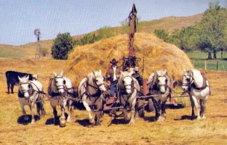 Buck Bucholz feeding hay